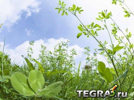 Cправочник лекарственных трав (Medicinal plants reference)